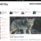 Best Aggregator Themes For WordPress – Wp Mayor With Drudge Report Template