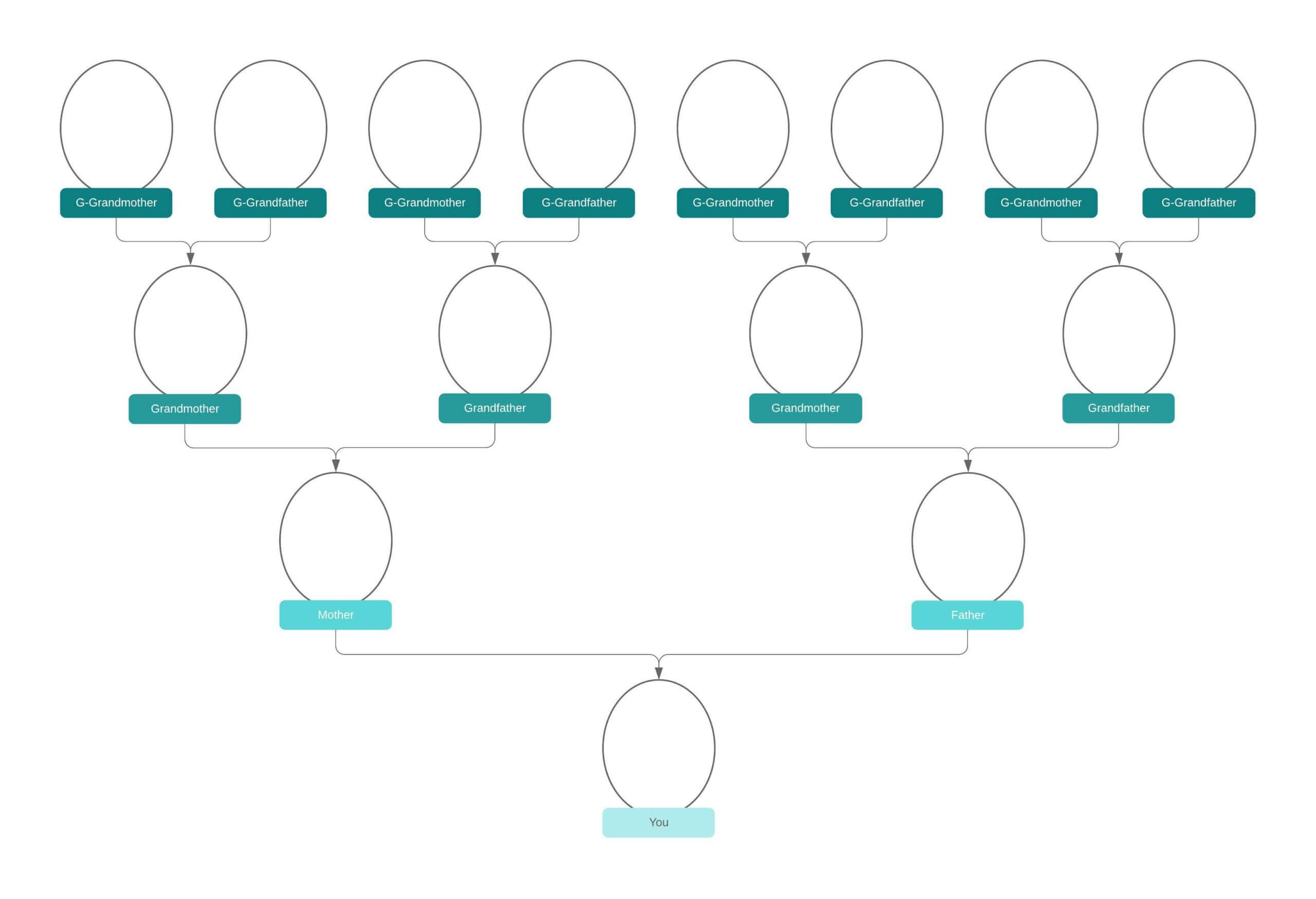 Family Tree Generator   Lucidchart Pertaining To Blank Tree Diagram Template