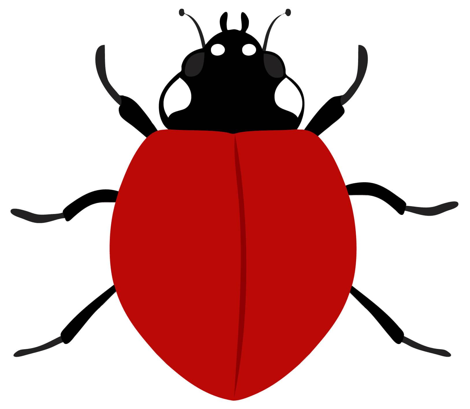 Ladybird Template. Ladybird Powerpoint Template Backgrounds With Blank Ladybug Template